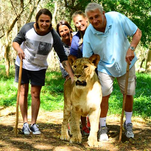 Walk with lions experience