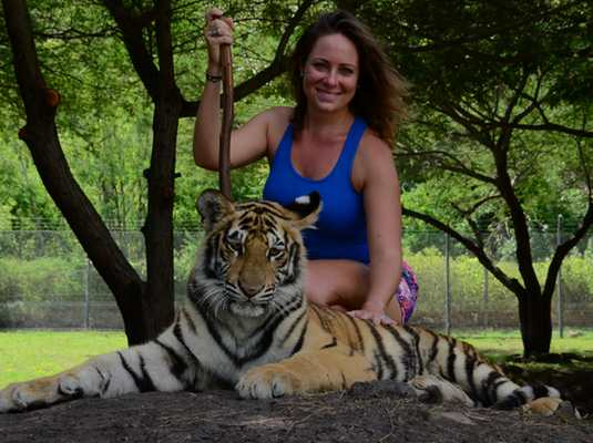 Tiger interaction