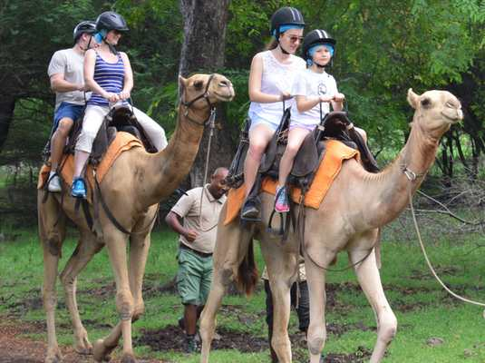 camel-ride-family
