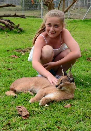 Caracal interaction