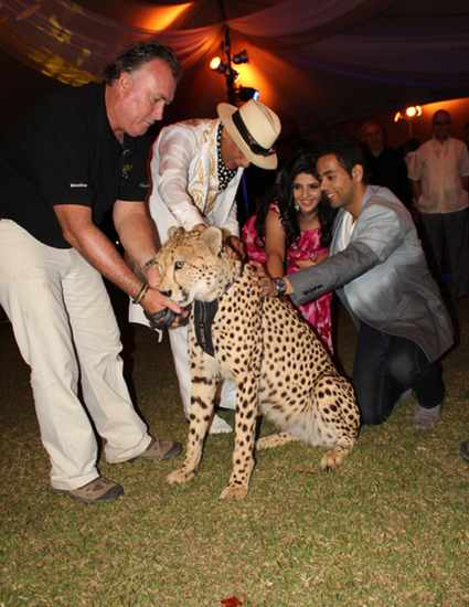 Cheetah function at wedding celebration