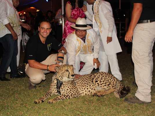 Cheetah function interaction