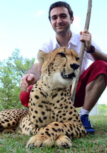 Cheetah interaction