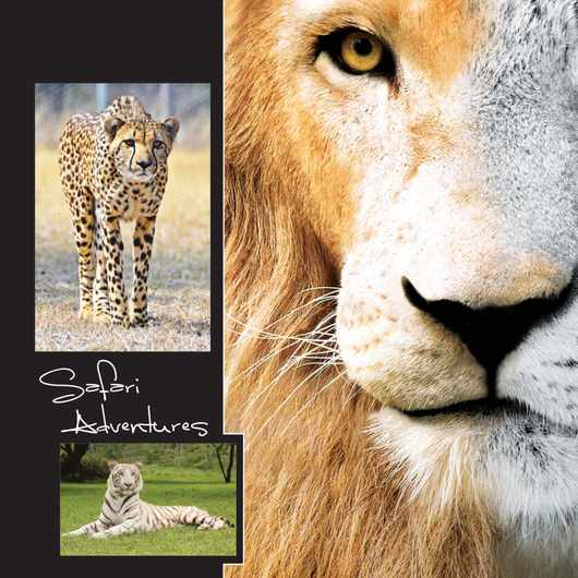 Safari Adventures media pack