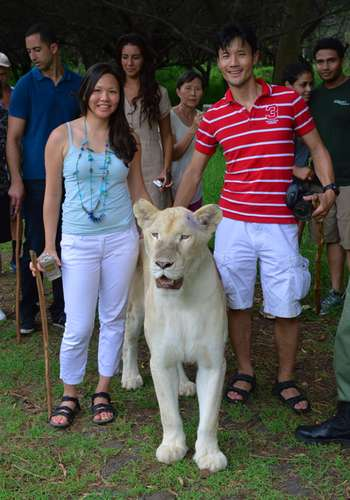 Walking with white lion