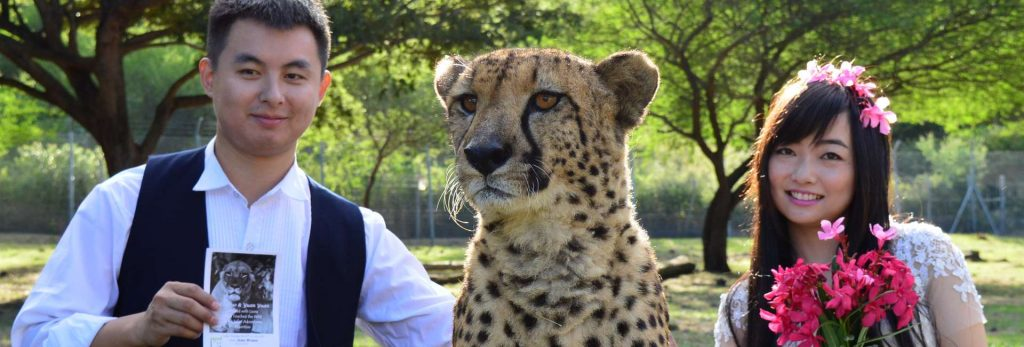 Wedding shoot with cheetah