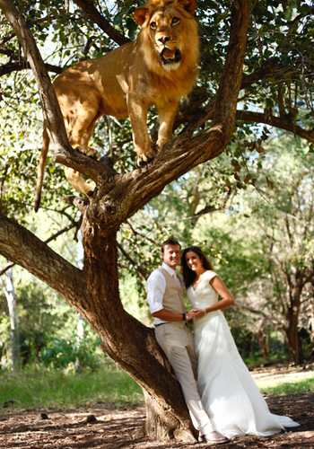 Wedding photo with lion in tree