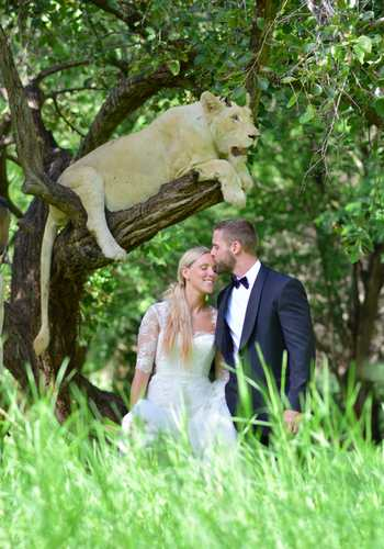 Wedding photo with white lion in tree