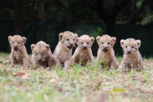 Lundis 4th litter