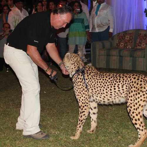 Cheetah Functions