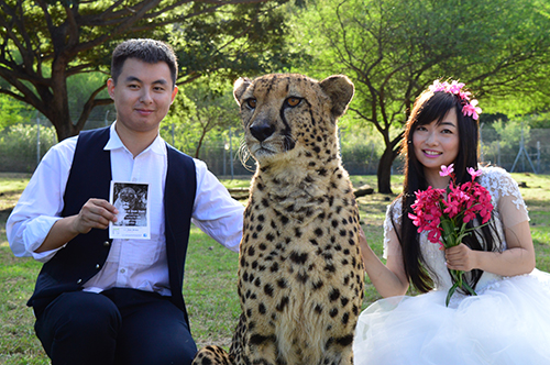 cheetah wedding
