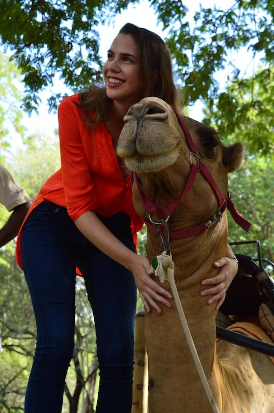 Camel Rides & Feeding